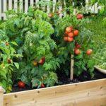 Cheat Your Way to a Healthy Veggie Garden